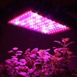 Benefit From the Use of Growing Lights.jpg